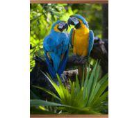 Настенный инфракрасный обогреватель Попугаи